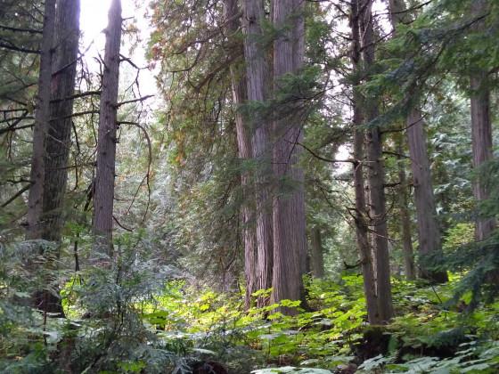 Regenwald2
