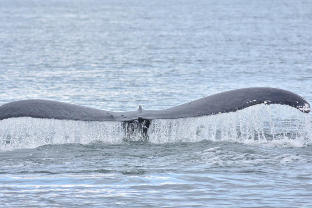Vancouver, Whalewatching 4