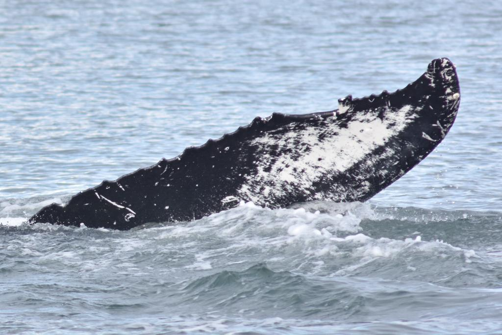 Vancouver, Whalewatching 2